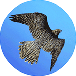 electronics brand logo inspiration: birds of prey
