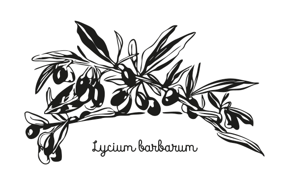 hand-drawn illustration of goji berries plant for packaging label design