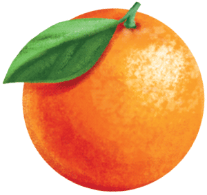 painted key visual illustration of an orange fruit for a smoothie juice label design