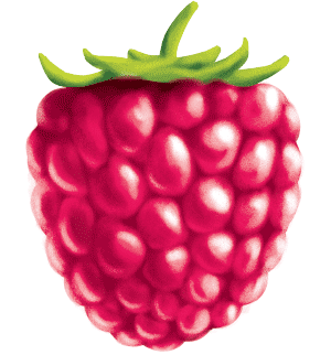 painted key visual illustration of a raspberry fruit for a smoothie juice label design